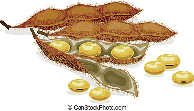 realistyczny, wektor, soybean., illustration.