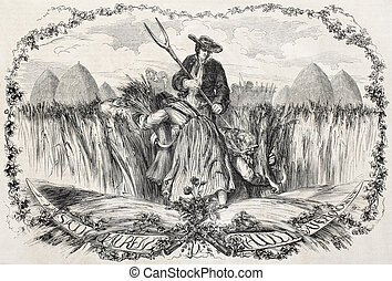 Reaping wheat - Old illustration of reaping wheat. Created...