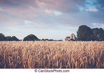 Reaping white in an agricultural field near the Hostoric Town Veere. With view on the big Church, zeeland, The Netherlands.