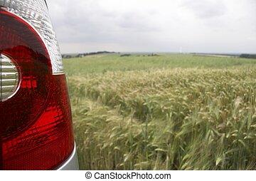 rear light in cornfield - landscape