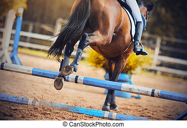 Rear view as a Bay horse jumped the blue barrier at a show jumping competition