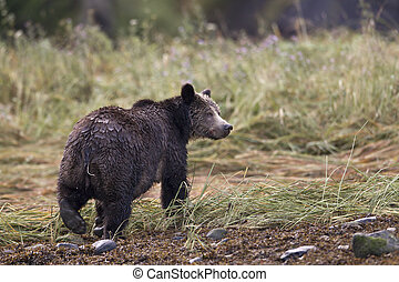 rear view of a bear