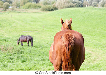 Rear view of a brown horse in a meadow