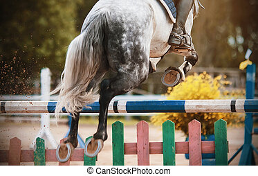 Rear view of a gray horse jumping over the barrier in jumping competitions.