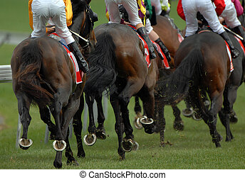 Rear view of a pack of race horses