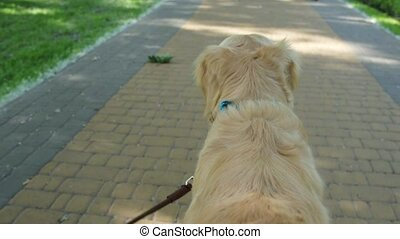 Rear view of a pleasant dog walking on the lead