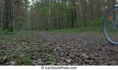 Rear view of cyclist cycling through forest on a autumn day.