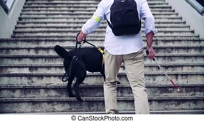 A rear view of senior blind man with guide dog walking up the stairs in city. Slow motion.
