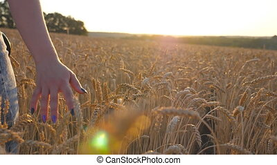 Rear view of young girl walking with her siberian husky dog through the cereal field and stroking golden rye at sunset. Female hand moving over ripe wheat growing on the meadow. Close up Slow motion