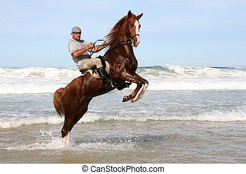 rearing, paarde, zee