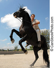 rearing stallion - beautiful black stallion with man in a...