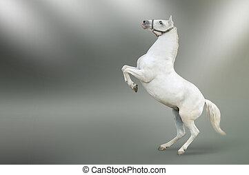 rearing, wit paard, vrijstaand
