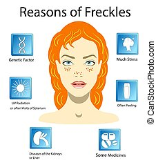 Reasons of freckles, vector illustration