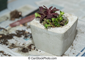 reative floral arrangement - succulents in concrete - self-...