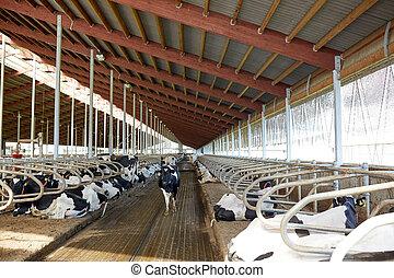 rebanho, de, vacas, em, cowshed, estável, ligado, fazenda...