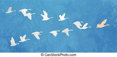 rebanho pássaros, liderança, conceito