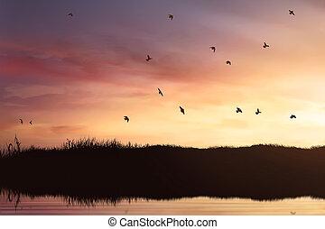 rebanho, voando, silueta, pássaros