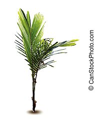 recém nascido, palma, vetorial, árvore