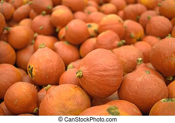 Recently harvested orange pumpkins for sale