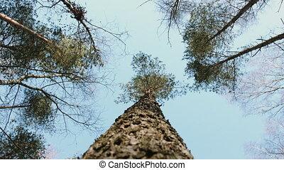 recherche, arbres