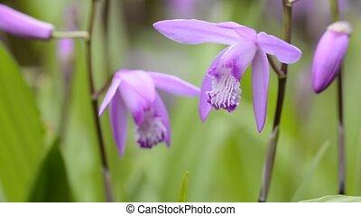 rechts, bovenkant, orchidee