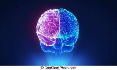 rechts, halfrond, in, lus, hersenen, concept