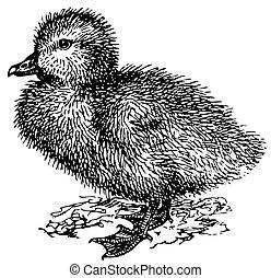 recién nacido, greylag, ganso