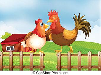 recinto, casa legno, indietro, illustrazione, gallo, sopra, gallina