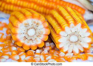 recogido, maíz, amarillo, autum, maduro