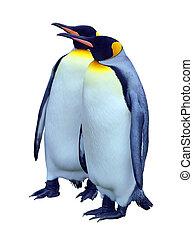 recorte, dos, aislado, pingüinos, trayectoria, emperador