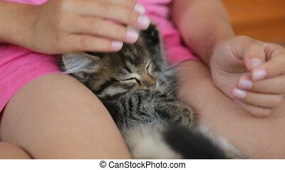 recouvrement, chaton, peu, dormir, fille