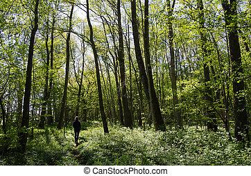 recreacional, caminhada dentro, um, floresta verde