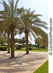 Recreation area and beach of luxury hotel, Dubai, UAE
