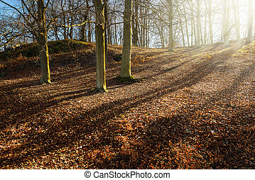 Recreation area with fallen dried leaves in a beautiful forest setting during spring
