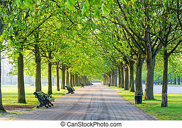 Recreational path in green park lined up with trees and beanch.
