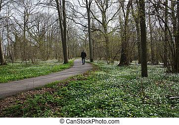 Recreational walk at spring