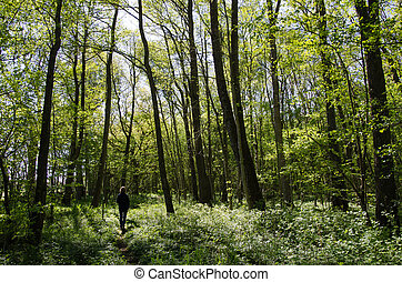 Recreational walk in a green forest