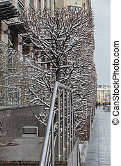 rectangular decorative tree in winter