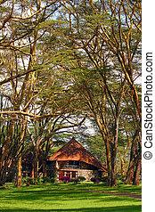 recurso, bosque, áfrica, turista