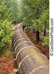 recurso, oleoduto, cortes, através, floresta nacional