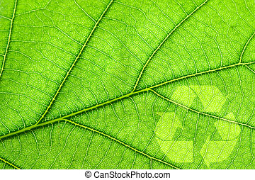 Recycling symbol on leaf - Recycling symbol on green leaf