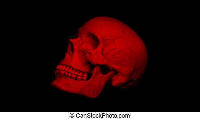 Red Adult Human Skull Rotating Loop