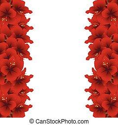 Red Amaryllis Border - Hippeastrum. Christmas Flower. Vector...