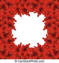 Red Amaryllis Border2 - Red Amaryllis Border - Hippeastrum....