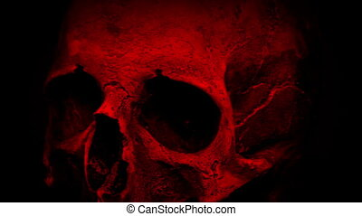 Red Ancient Human Skull Rotating Closeup Loop