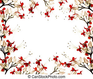 Red and black butterfly flower frame background