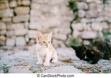 Red and black kittens on the pavement against the background of a stone wall.