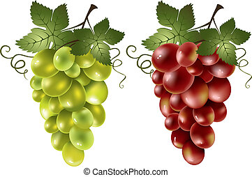 Red and green grape on the white background.