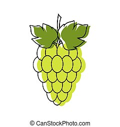 Red and green grapes on white background, grape types set. Logo design, vector illustration. Wine vector logo art.