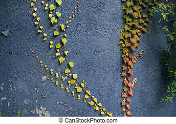 Red and green leaves texture background. Autumn leaves on blue wall.